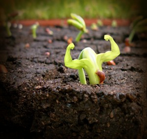 seedling-300x285